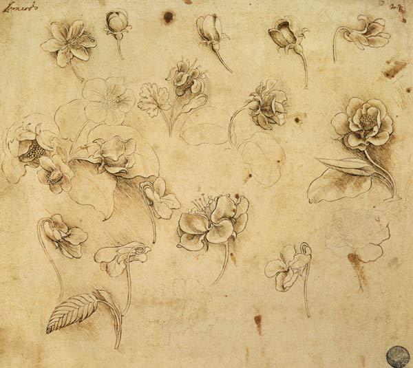 Studio di fiori, disegno di Leonardo Da Vinci. (immagine dal web) MMI Today | La giornata mondiale del disegno